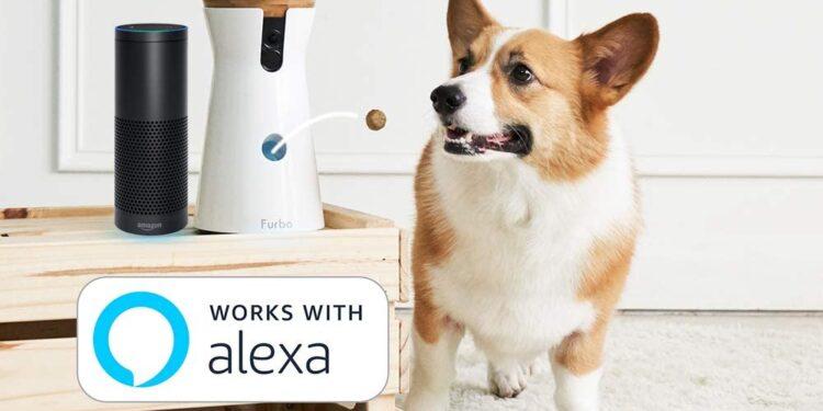 cane mangia croccantino lanciato da telecamera per cani qualita prezzo