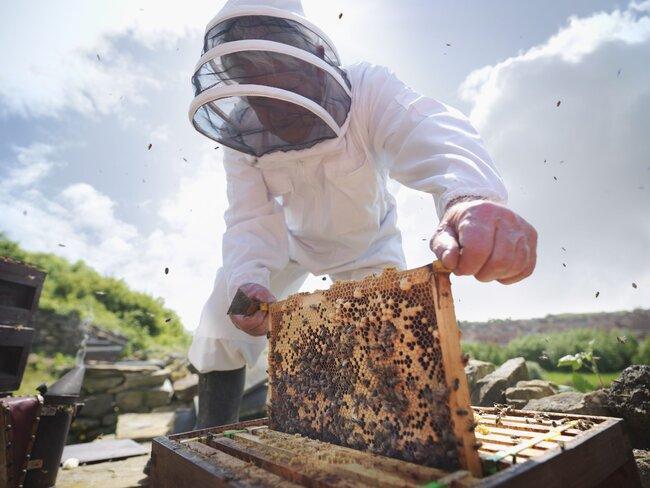 apicoltore con tuta da apicoltore su qualità prezzo