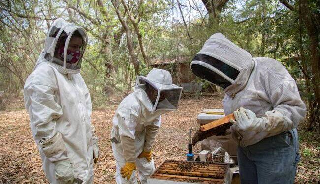apicoltori con la tuta raccolgono il miele dalle arnie