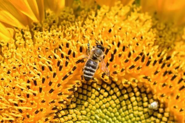 3Bee_Adotta un alveare ape su fiore